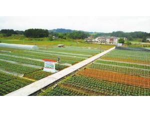 杭州市萧山区新围五号区块土地垦造耕地